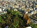 2015-03-08 Swayambhunath,Katmandu,Nepal,சுயம்புநாதர் கோயில்,スワヤンブナート DSCF4330.jpg
