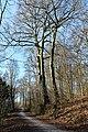 2018-02-24 ND 68 - Essen-Bredeney, Eichen.jpg