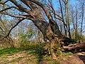2021-04-21 10-14-39 arbre.jpg