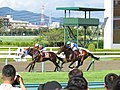 27th The Centaur Stakes - 第27回セントウルステークス - Hanshin Racecourse, Takarazuka (9701880312).jpg