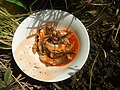 2839Home cooking of ginisang sayote, ampalaya and carrots 37.jpg