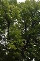 51-101-5017 Lypa DSC 3882.jpg