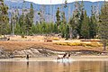 A bull elk chases some cows on the shore of Yellowstone Lake (32955069624).jpg