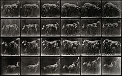 A horse jumping over three ponies. Photogravure after Eadwea Wellcome V0048755.jpg