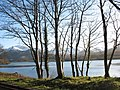 A line of trees along the shore of Llyn Padarn - geograph.org.uk - 320195.jpg