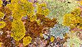 A rolling stone gathers no moss.jpg