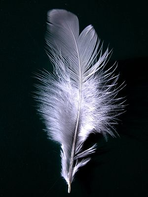 A single white feather closeup.