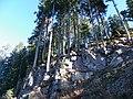 Abeti sulle rampe di Maso Colle 1335 m - Nova Ponente (BZ) - panoramio.jpg