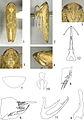 Abrus xishuiensis - ZooKeys-318-081-g001.jpeg
