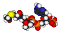 Acetyl-coenzyme-A-3D-vdW.png