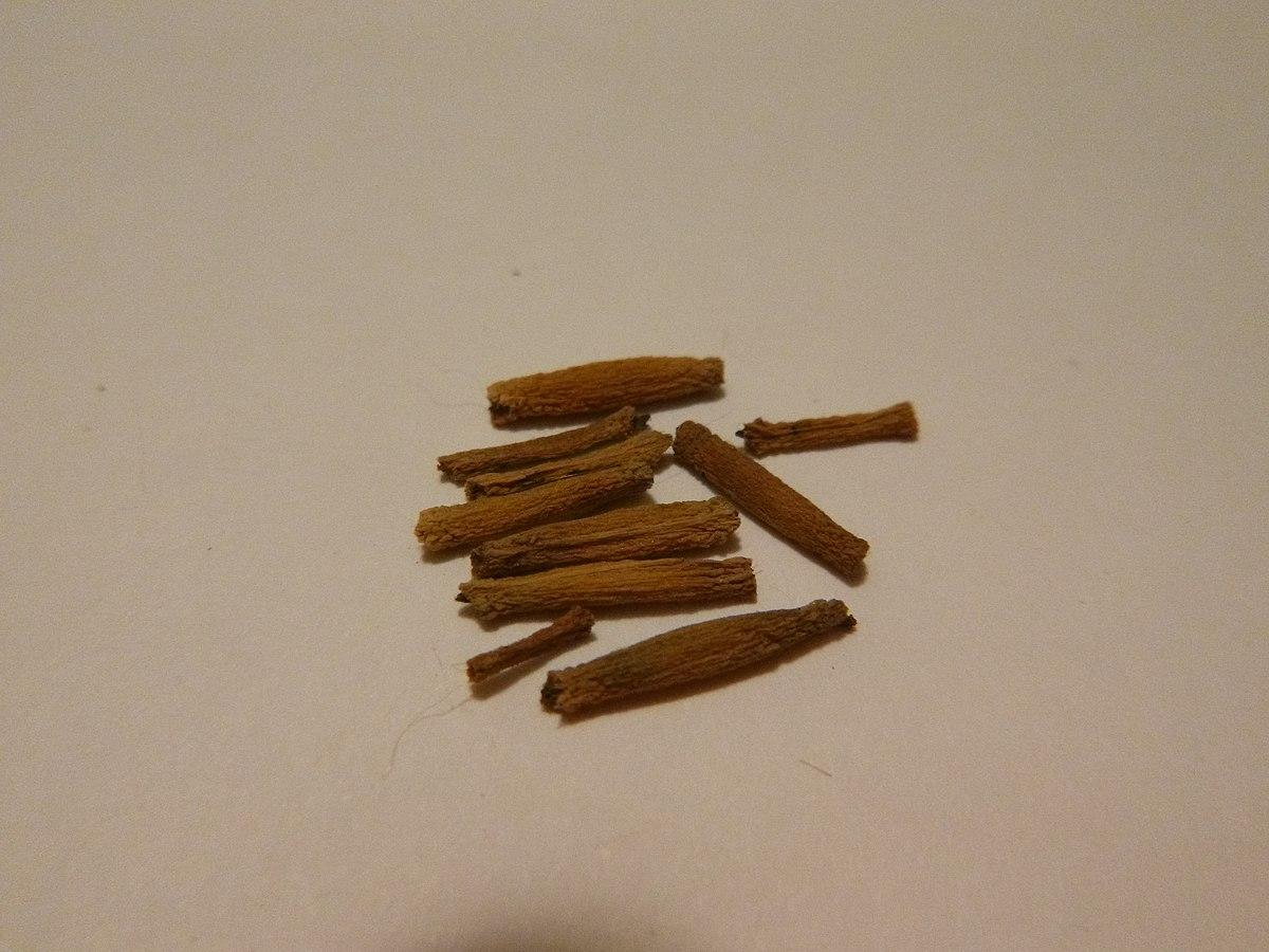 Adenium obesum seed.JPG