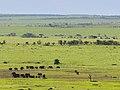 African elephants (3075371405).jpg