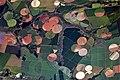 Agricultural Fields near Perdizes, Minas Gerais, Brazil.JPG