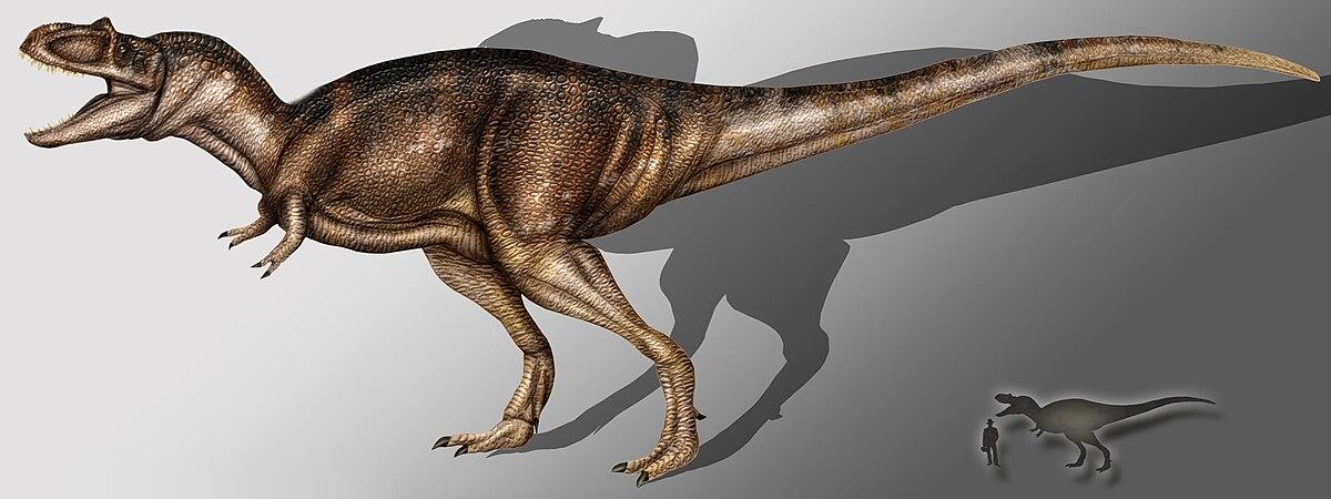 Tyrannosaurus Canyon Albertosaurus sarcopha...