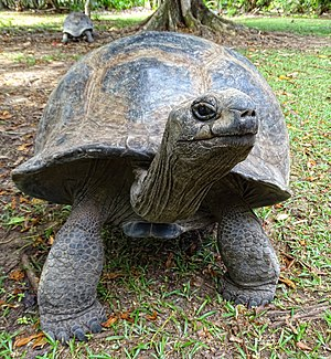 La Digue -  The giant tortoise of Aldabra