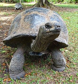 La Digue -  The giant tortoise of Aldabra