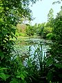 Alfred Caldwell Lily Pool, Lincoln Park, Chicago, IL.jpg