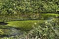 All green (8042600938).jpg
