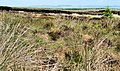 Altikeeragh Nature Reserve near Castlerock (7) - geograph.org.uk - 1911911.jpg