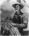 Alton Lee carries a shock of wheat across the broad fields of the Saugstad farm where he works from sunrise to long... - NARA - 196265.tif