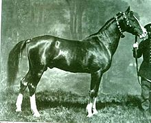 Solid-colored stallion with four white stockings and a blaze