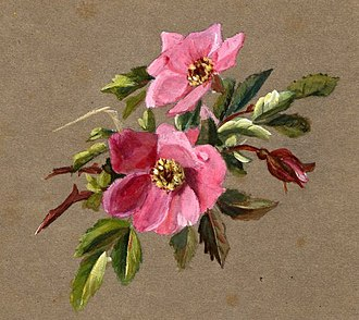 Amelia Bauerle - Amelia Bowerley Flower study