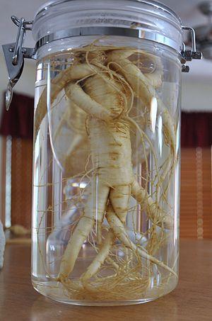 English: American ginseng in human figure. Cul...