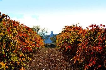 Ametlla de Segarra, vinyes de Tardor.jpg
