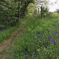 Amroth, UK - panoramio (2).jpg