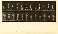 Animal locomotion. Plate 25 (Boston Public Library).jpg