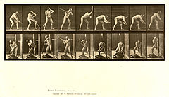 Animal locomotion. Plate 396 (Boston Public Library).jpg
