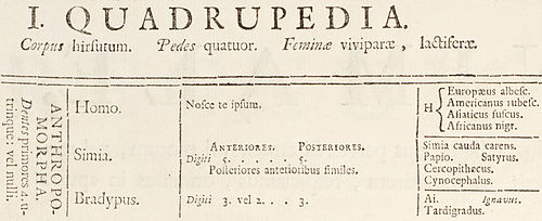 Anthropomorpha Detail form Systema Naturae 1735.jpg