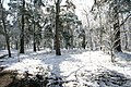 April snow in Bunkers Hill Wood - geograph.org.uk - 1628023.jpg