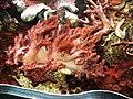 Aquarium SEA LIFE Paris Val d'Europe - panoramio (1).jpg