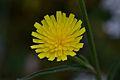 Araignées, insectes et fleurs de la forêt de Moulière (Les Agobis) (28942734101).jpg