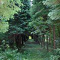 Arborétum Felaťa.JPG