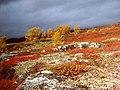 Arjeplog tundra -fall - panoramio.jpg