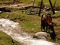 Aru Valley3.jpg