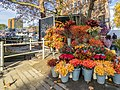 Autumn colors Herfst in Rotterdam - Bloemenkraam Meent Delftsevaart (22632171115).jpg