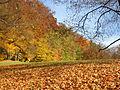 Autumn in Coburg.JPG