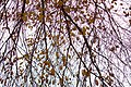 Autumn in iran پاییز در ایران- استان قم 15.jpg