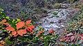 Autumn season in Butanic Garden فصل پاییز در باغ بوتانیکال تفلیس 33.jpg
