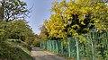Autumn season in Butanic Garden فصل پاییز در باغ بوتانیکال تفلیس 46.jpg
