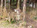 Baby Giraffe at Kilimanjaro Safaris.JPG