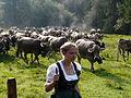 Bad Hindelang - Viehscheid - Hinterstein nw 05.JPG