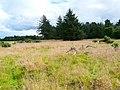 Balblair nature reserve - geograph.org.uk - 917250.jpg