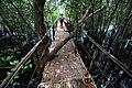 Bamboo Walkway, San Vicente Marine Sanctuary.jpg