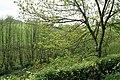 Bampton, valley near Pipshayne - geograph.org.uk - 171851.jpg