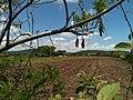 Barbecho - panoramio (1).jpg