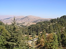Al Chouf Zedern-Nationalpark